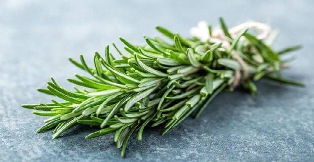 Akdeniz'in mis kokulu bitkisi biberiye: Neye faydalıdır, ne kadar tüketmek gerekir?
