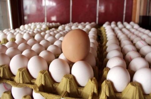 Tavuk Yumurtası