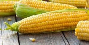 Süt mısırı lezzeti arayanlara: Evde haşlanmış mısır nasıl yapılır?